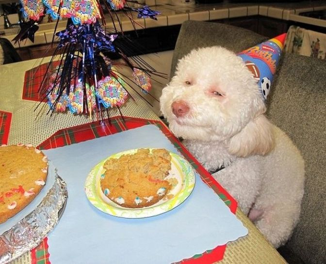 Are you excited for our Birthday Party?